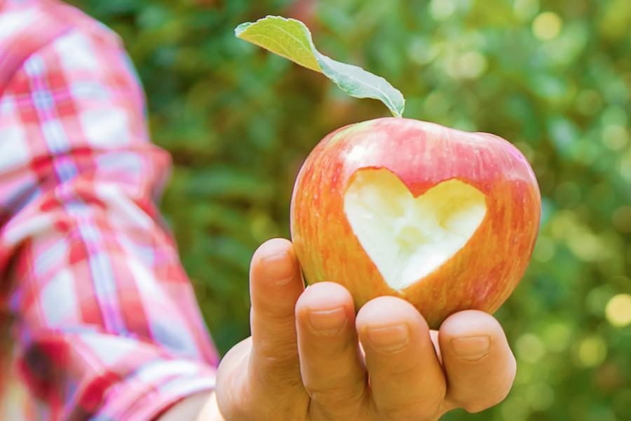 Obstplantage in Leese: Selbstpflücktage ab 10. September
