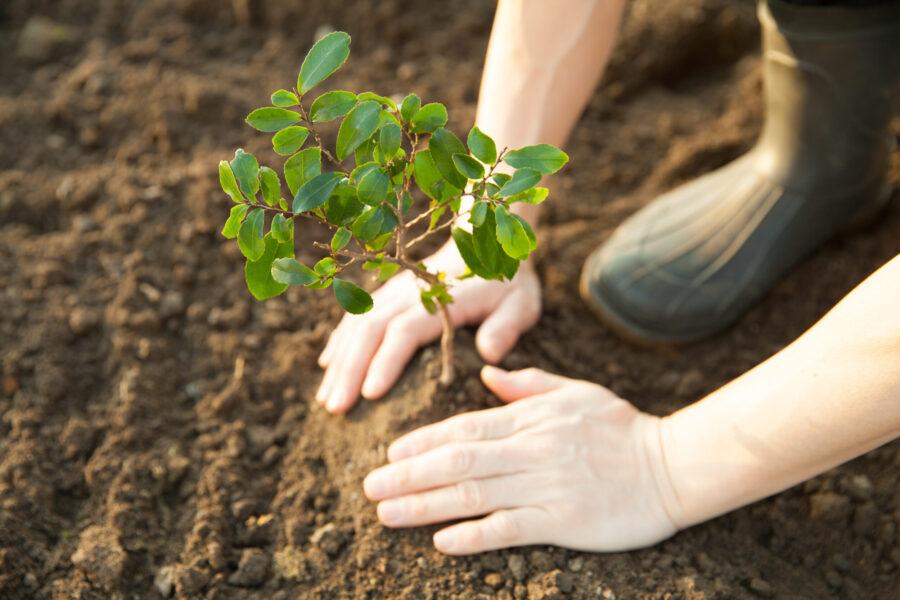 Nachhaltigkeit: 114 Fahrzeuge = 114 neue Bäume